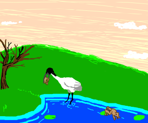 A bird eats a frog, over the hills.
