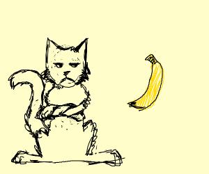 Cat dislikes banana