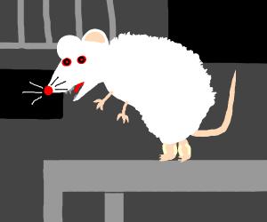 Angry lab rat