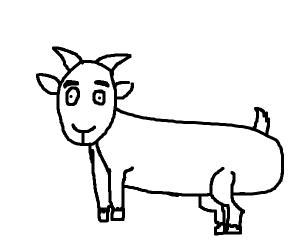 black/white goat