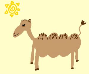 bumpy camel