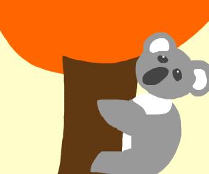 Chill Koala