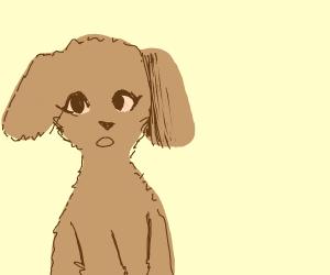Lovely brown pet dog