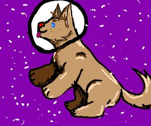 space pupper