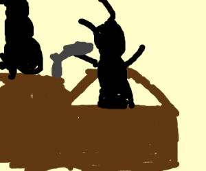 Ant trial