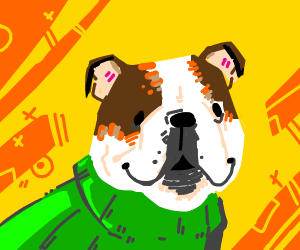 bulldog with a green sweater