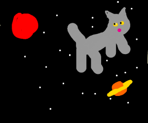 A cat floating off in space