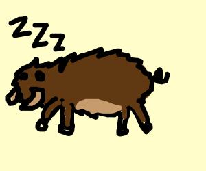 Sleepy Boar