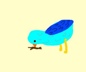 Blue bird pecking at sticks