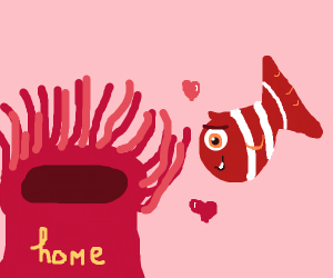 Clownfish loves new home