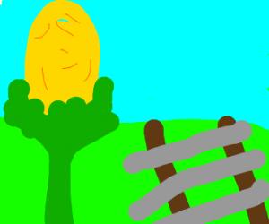 Corn by the railroad