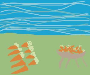 carrots field