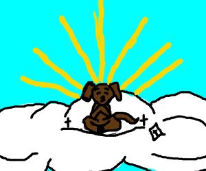 Dog God meditates on cloud