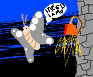 moth need lamp