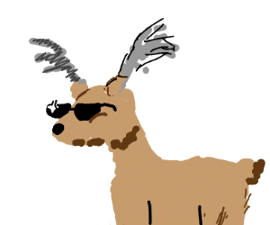 A very cool deer boi