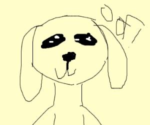 A dog pic
