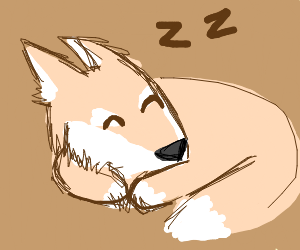 Skin-colored fox does a sleep