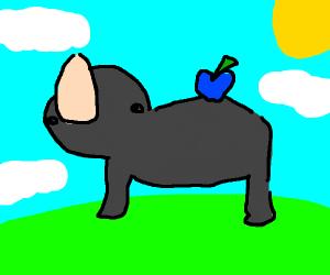 Blue apple on rhino's back.