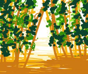 Lush swamp