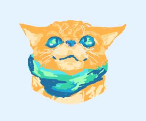 Cute cat with bandana/scarf