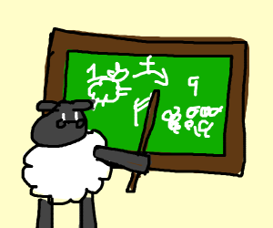 sheep teaching math