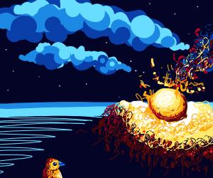 Bird watches meteorite