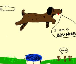 Dog Bouncer