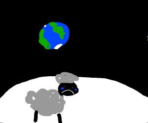 sheep crys at the moon