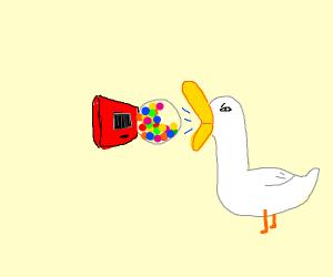 duck inhaling gumball machine
