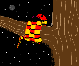 red and yellow snake wrapped around tree