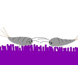 2 angry silverfish on purple carpet