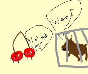 Cherries go to dog jail