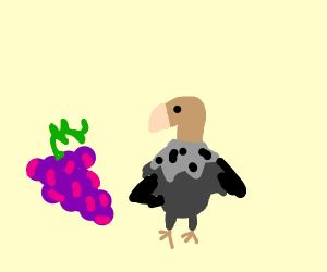 Vulture eating Grapes