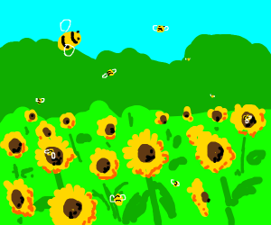 Bees in Sunflower Field