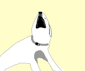 Dog Screaming