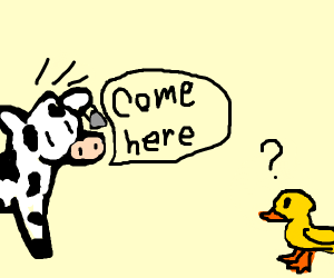 Cow tells duck to come here