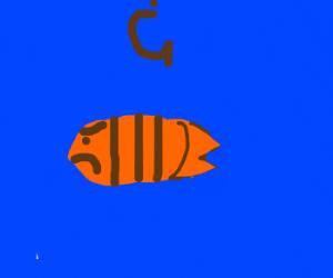 Cranky Goldfish