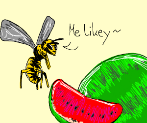 Wasp likes watermelon