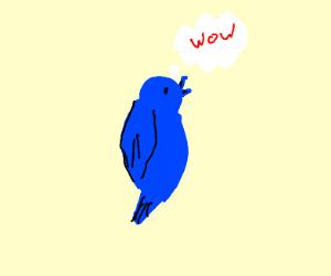a blue bird thinking
