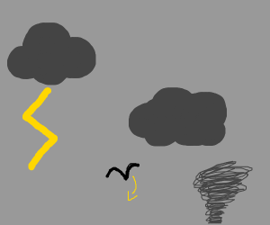 Bird falling from the sky in a thunderstorm