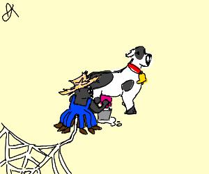 Spider milks a cow