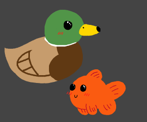 The Ducks And The Fishes