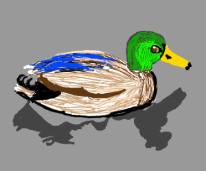 very well drawn duck