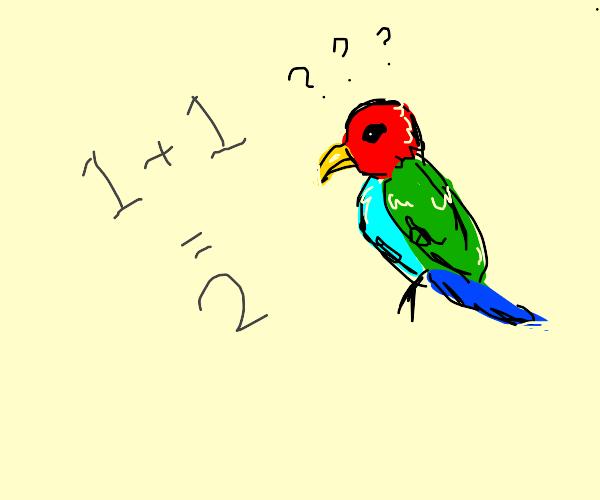 Parrot Doesn't Understand Math