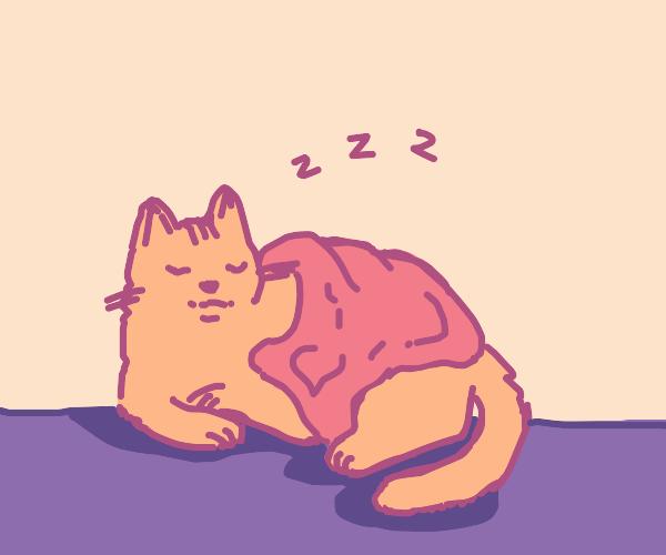 warm sleepy kitty