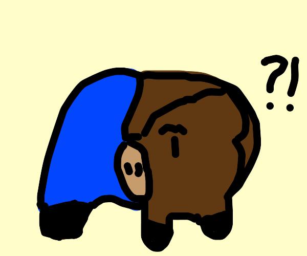 Boar wearing Pants