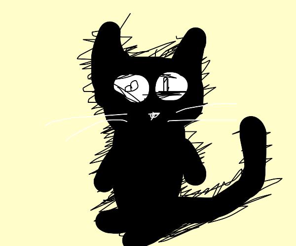 an average furry cat