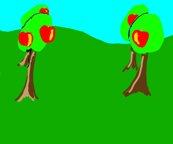 Orchard with head-sized apples
