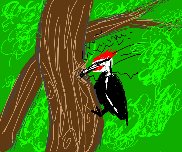 Snazzy Woodpecker
