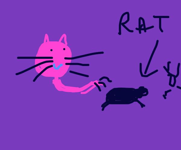 The cat killed a rat